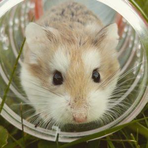 Repoussez les souris de votre habitation